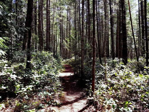 Beaumont Forest Trail 20180514