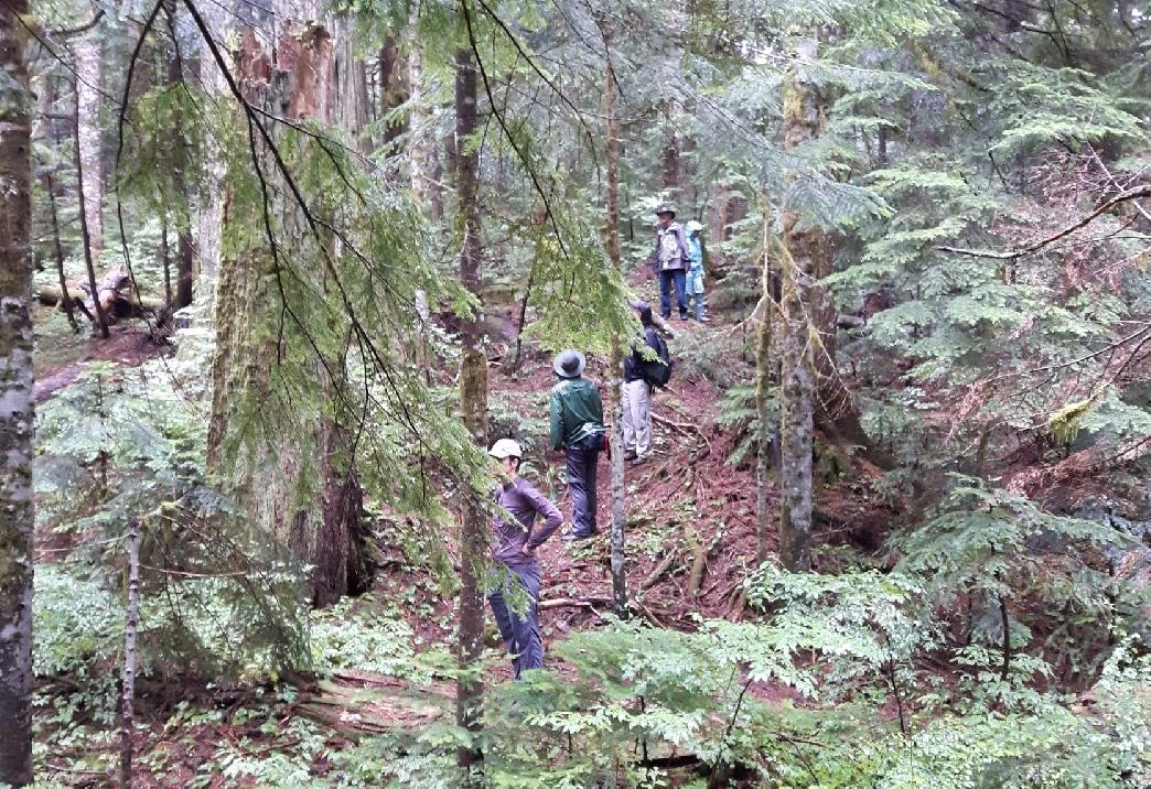 Old Growth Conservancy Tour 20190821