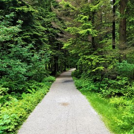 Stanley Park Forest Trail